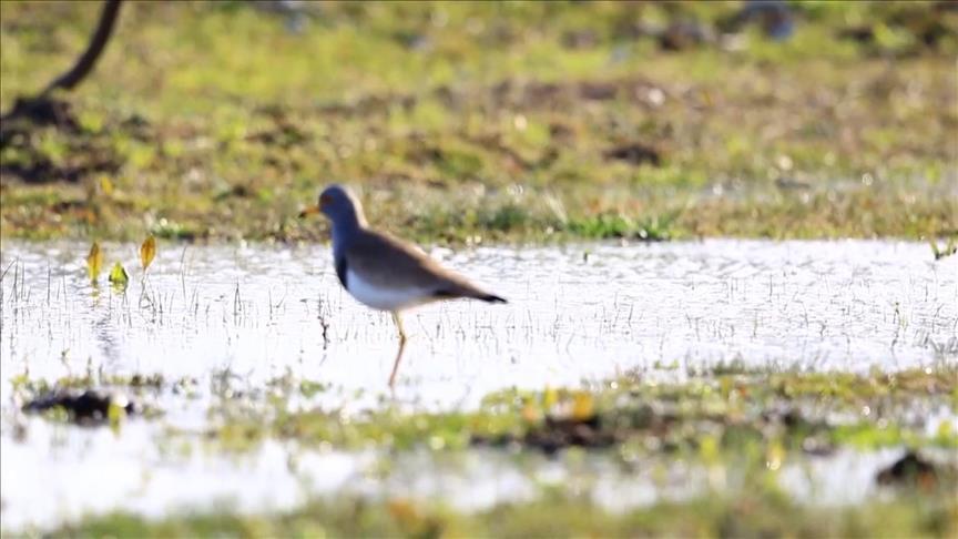 تركيا تعلن عن تسجيل نوع جديد من الطيور في أراضيها