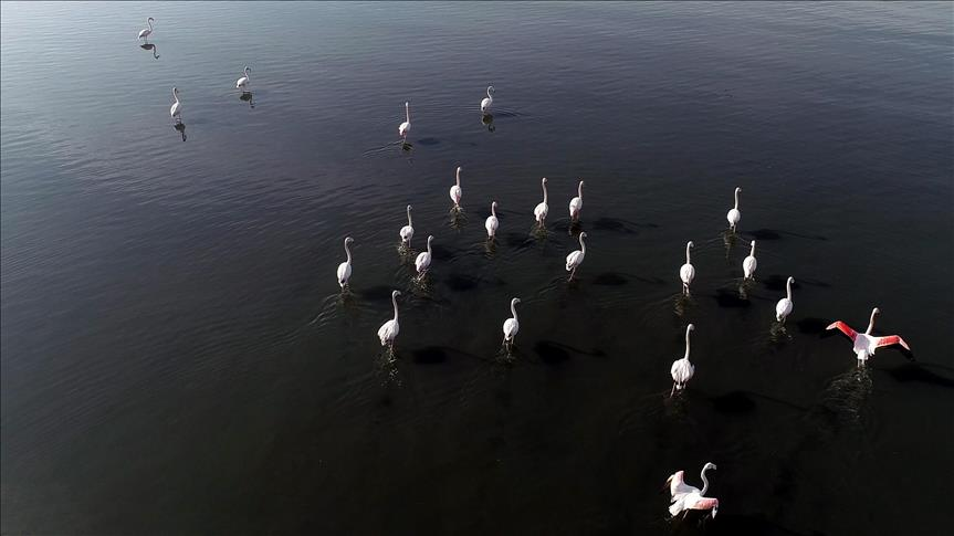 """""""خليج إزميت"""".. جنّة لمختلف أنواع الطيور"""