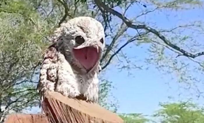 """شاهد : ظهور طائر غريب يشبه """"الشبح """" َوامرأة تصرخ من شدة الذعر"""