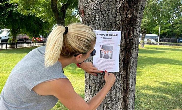 """مكافأة 10 آلاف ليرة.. البحث عن الكلب """"كارلوس"""" الضائع في إسطنبول (صور)"""